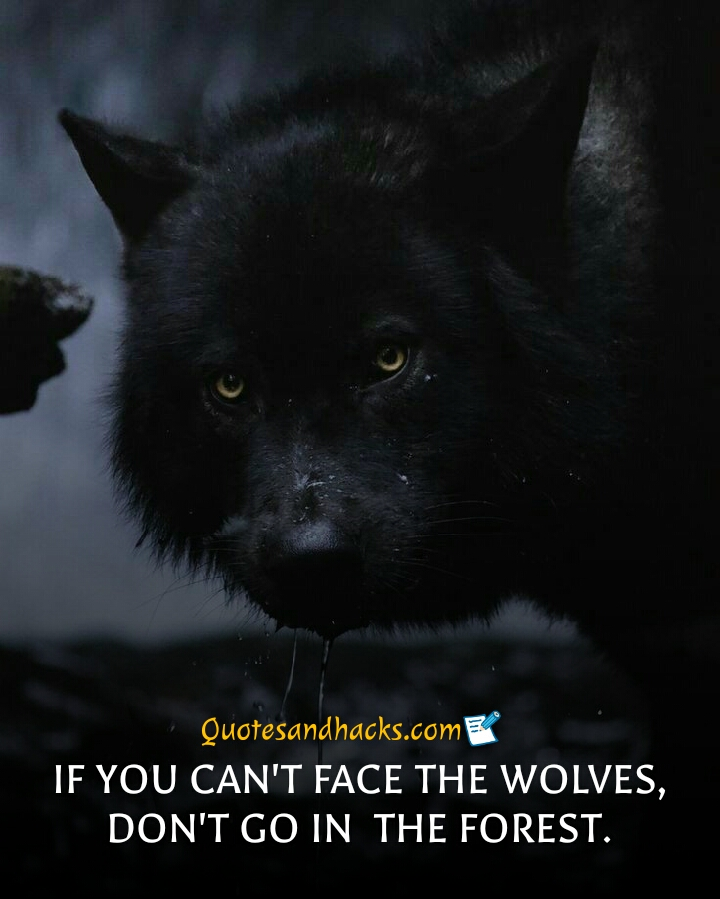 30 Lone wolf quotes that will trigger your mind - Quotes and ...