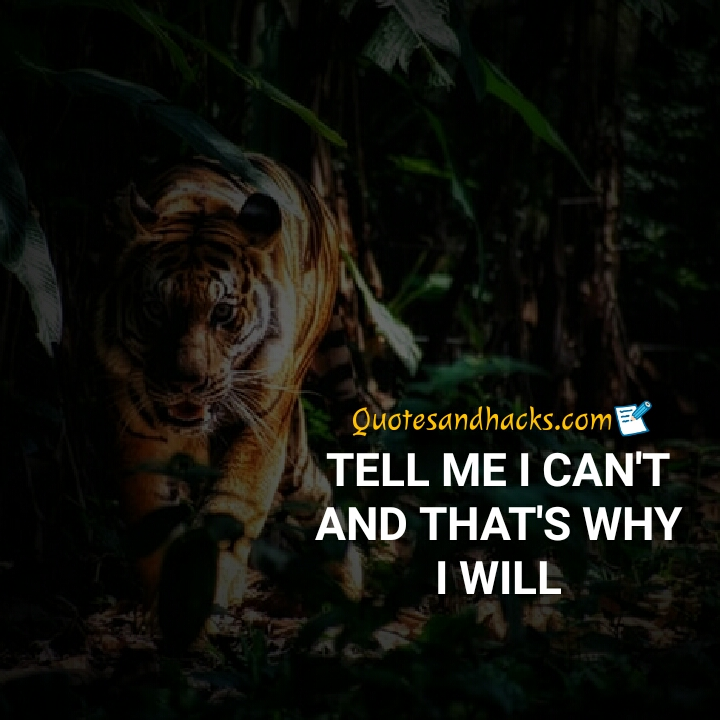 tiger quotes